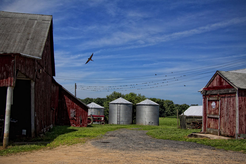 (c)JerseyStyle_Photography_Westhaven Farm2_8476