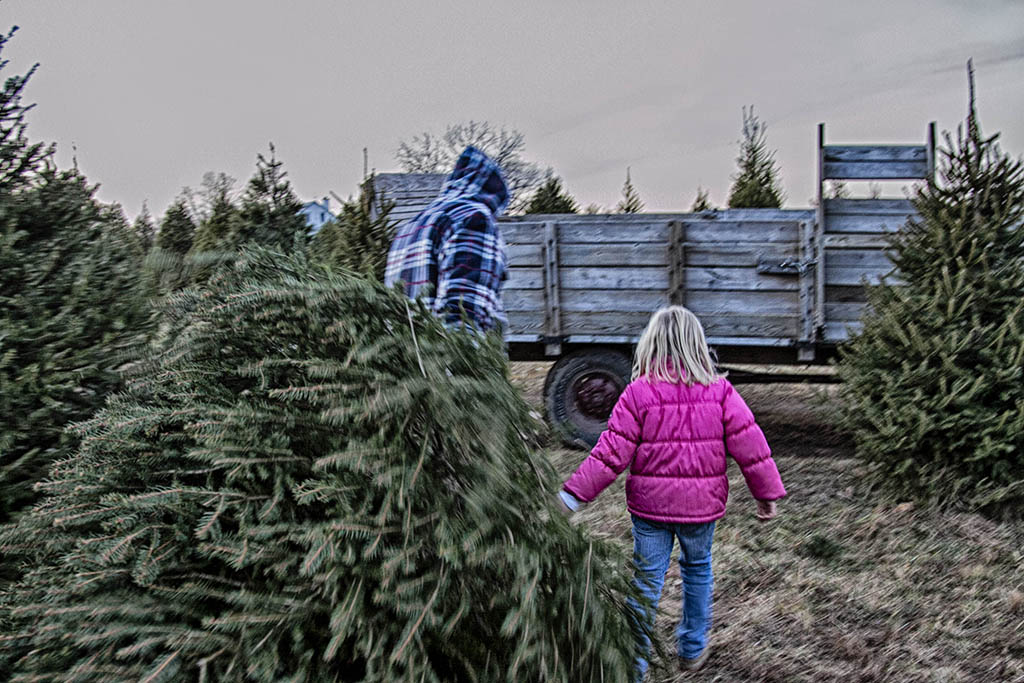 (c)JerseyStyle_Photography_Liv pulling tree_122013_6941