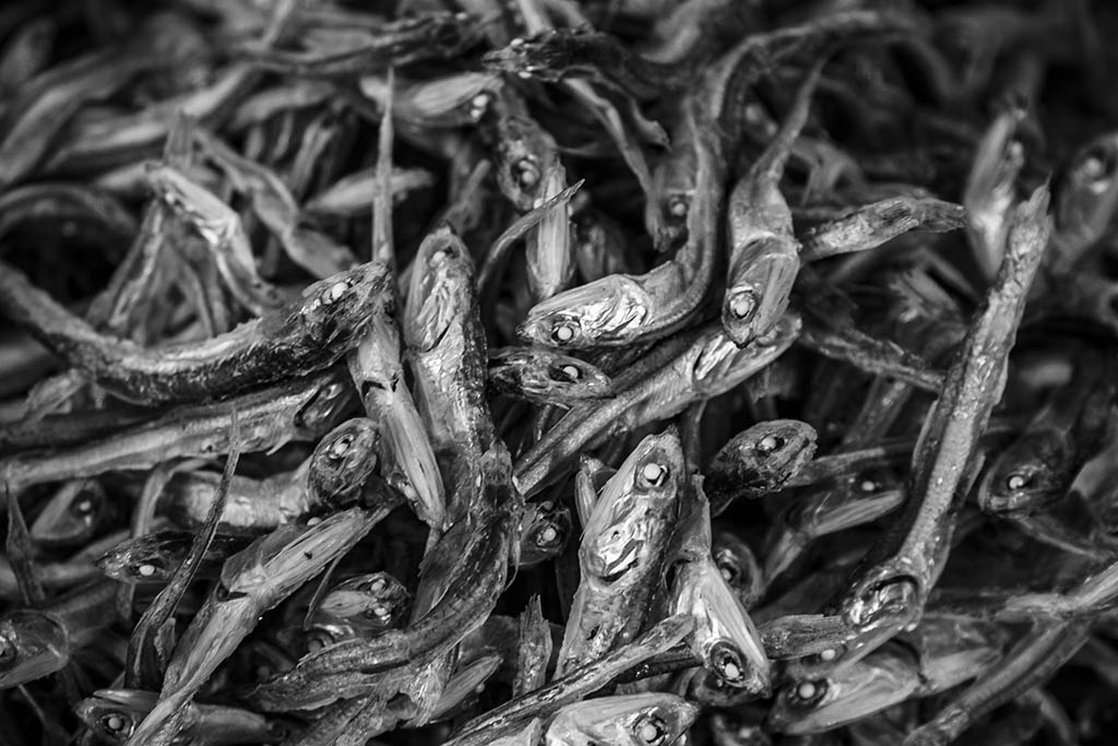 (c)JerseyStyle Photography_Tsukiji dried fish_bw_2010_9214