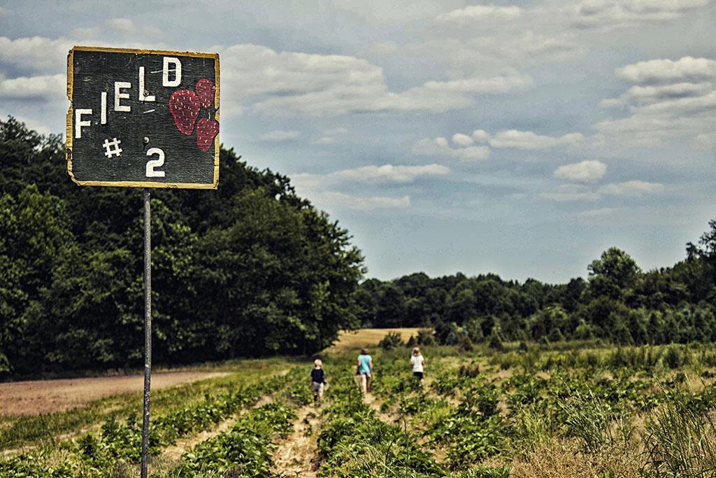 (c)JerseyStyle Photography_Strawberry picking2_062014_6976