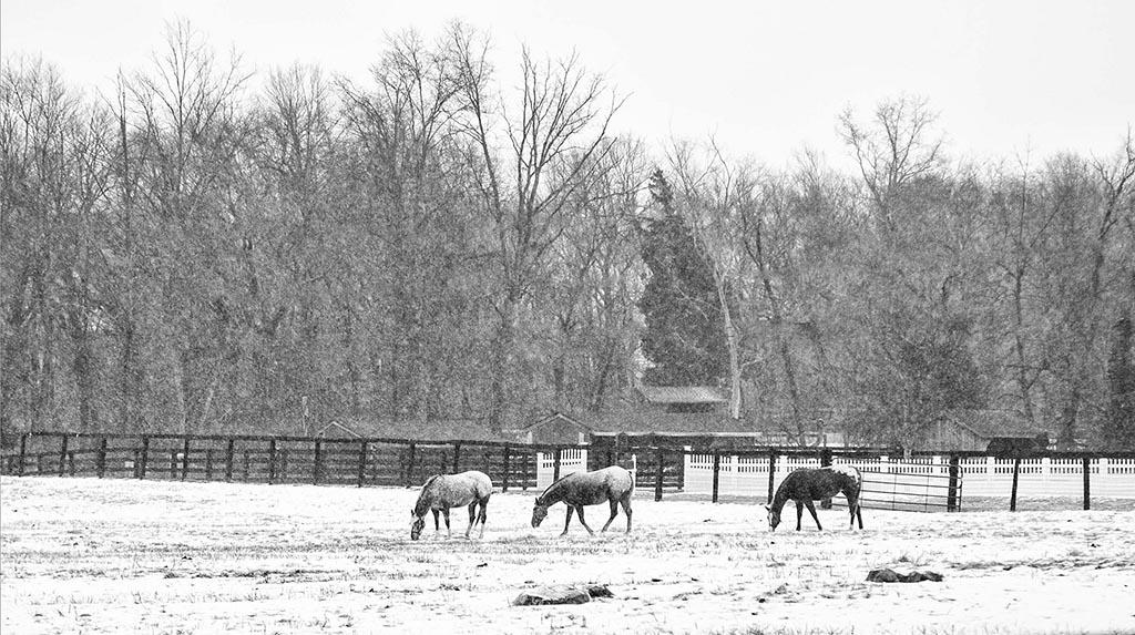 (c)JerseyStyle Photography_horses_2014