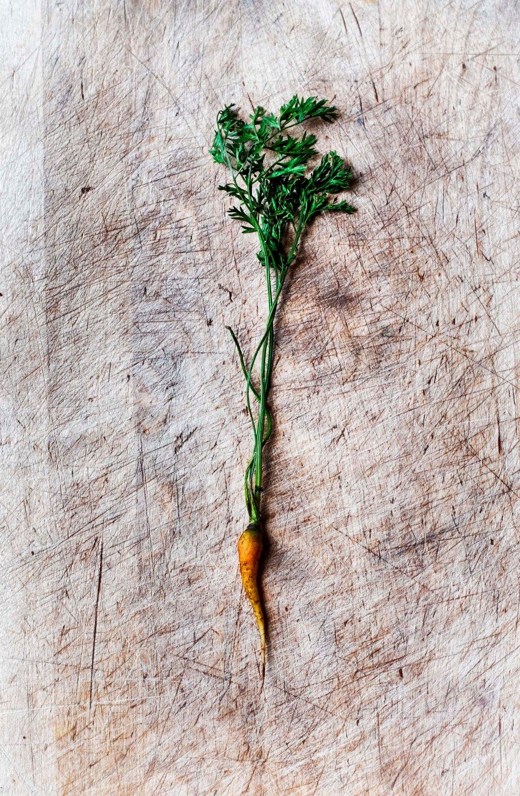 carrott_100316_dscf8711
