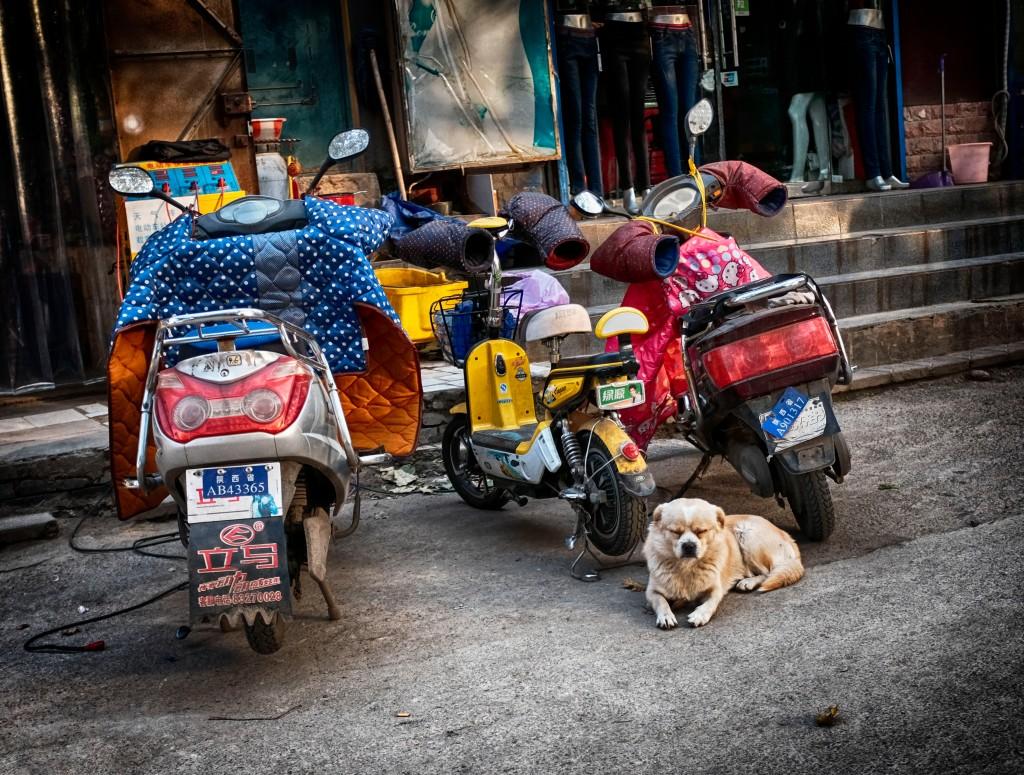 dog-tired_xian_112816_dscf0741