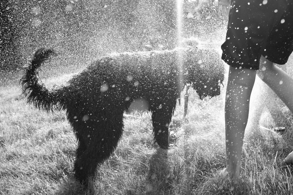 Bo_sprinkler_061217_DSCF8512