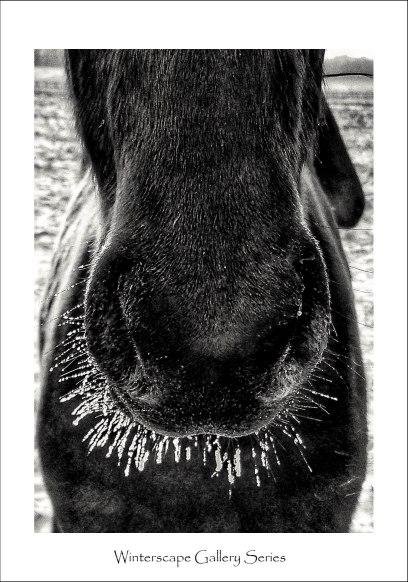 Horses_framed__122017