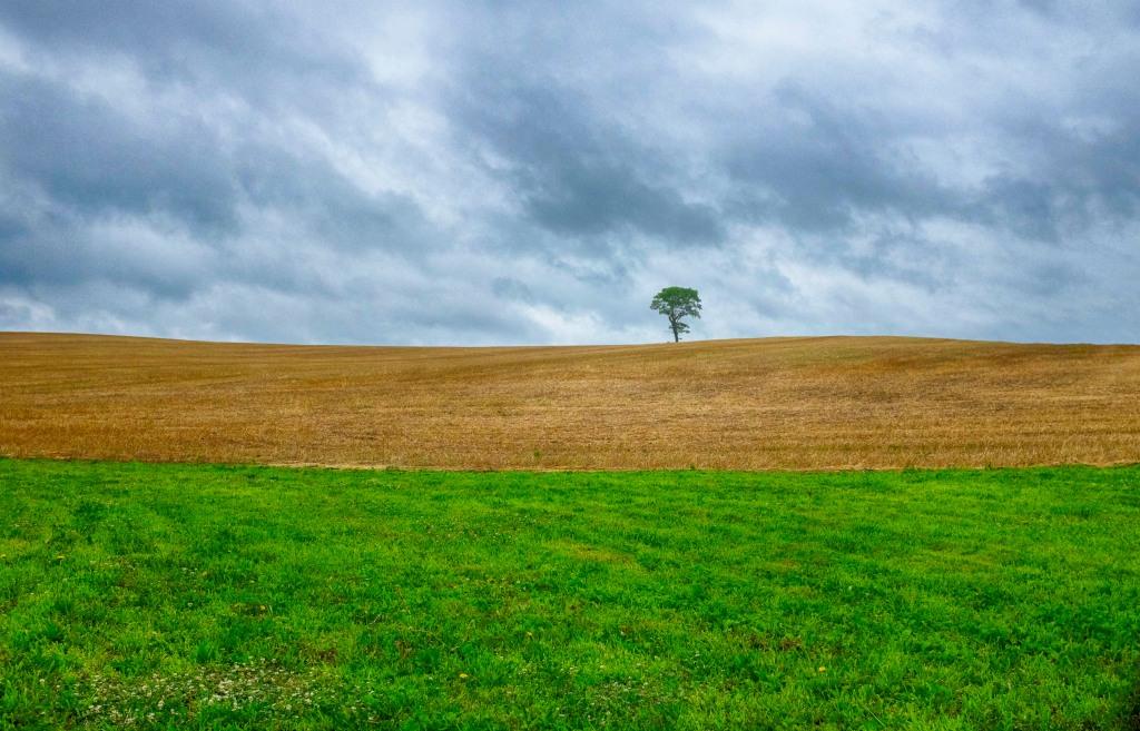 Lone Tree_062718_DSCF3509