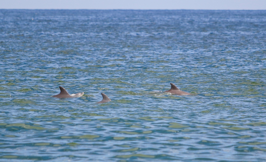 Dolphins_jerseystylephotography_090819_MG_0741