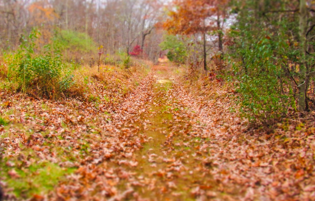 Wooded Path_111019_IMG_1023