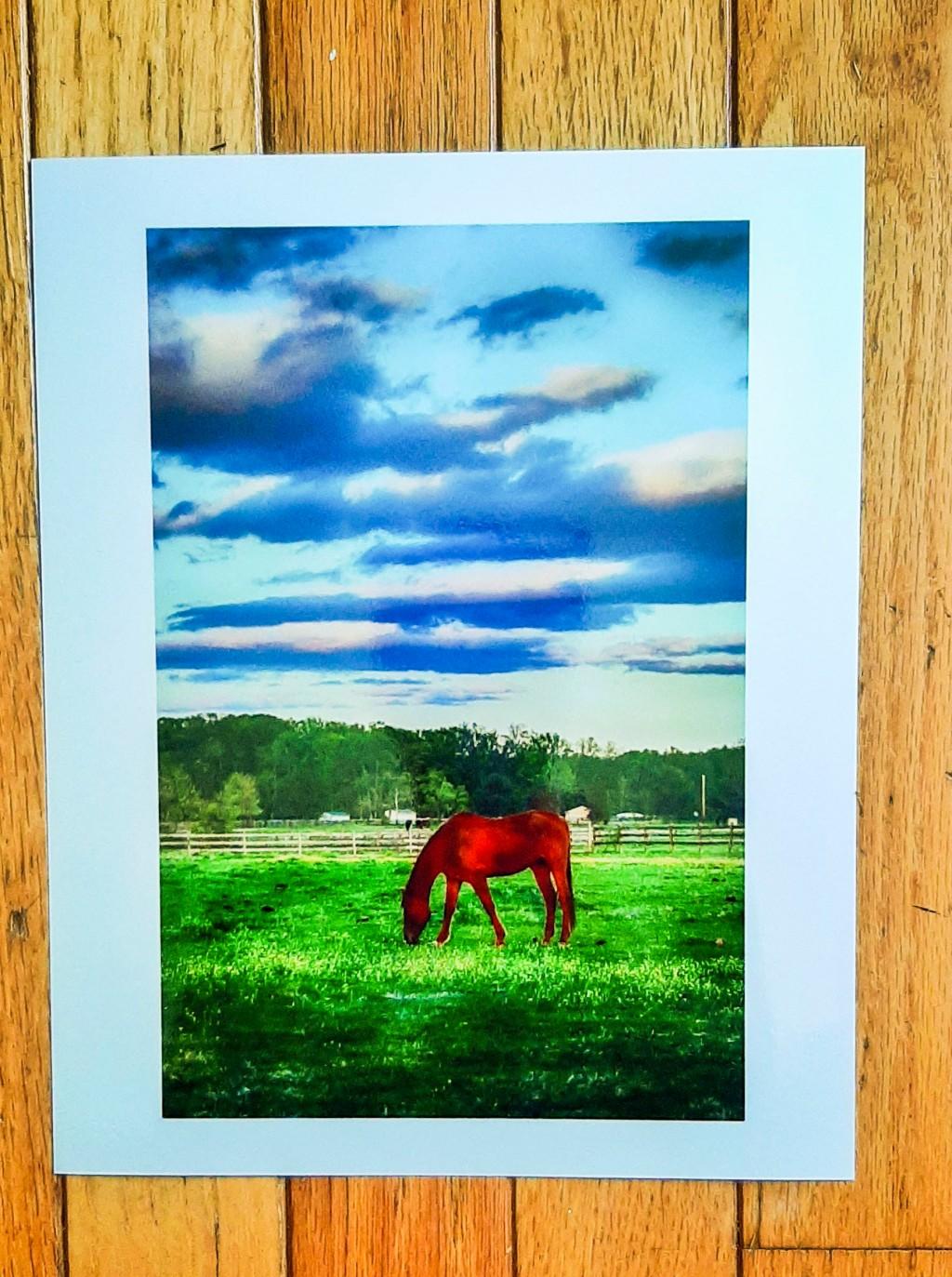 Assumpink Horse_052020